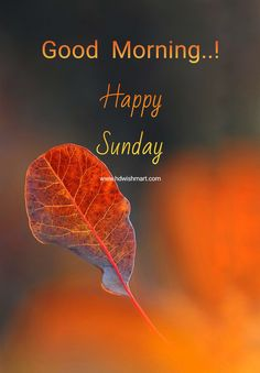 Sunday Morning Wishes, Good Morning Wishes Friends, Sunday Greetings, Happy Morning Quotes, Good Morning Happy Sunday, Morning Messages, Funny Morning, Morning Msg, Sunday Morning Images