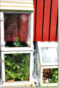 homemade greenhouse Homemade Greenhouse, Old Windows, Victorian, Plants, Outdoor, Antique Windows, Outdoors, Diy Greenhouse, Plant
