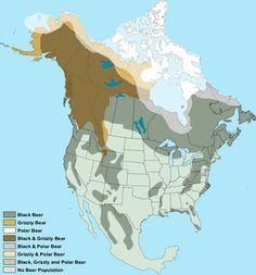 North American Bear Populations