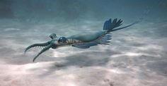 Paleo-art by Ken Daud Cambrian Fauna from the Burgess Shale and the Maotianshan Shales. Another anomalocarid from the Chengjiang fauna of the Maotianshan Shales (525 million years ago)