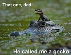 see ya later alligator, after a while , crocodile - Saferbrowser Yahoo Image Search Results