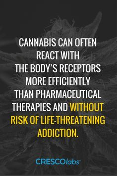 Cannabis can often react with the body's receptors more efficiently than pharmaceutical therapies and without risk of life-threatening addition.(medical marijuana, cannabis)