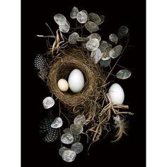 Nesting, Still Life, Scanner Photography, By Ellen Hoverkamp - Scanner… Still Life Photography, Art Photography, School Photography, Culture Art, Still Life Photos, Ikebana, Wabi Sabi, Bird Feathers, Be Still