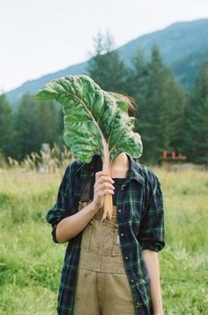Big Chard. Photographed by Alana Paterson at Ice Cap Organics farm.