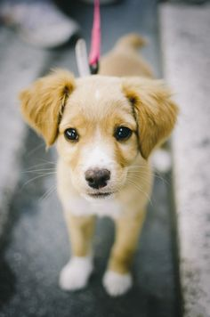 Doggy. | Flickr - Photo Sharing!
