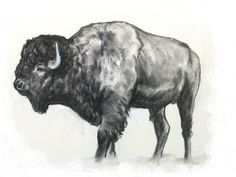 sketching buffalo | ... buffalo out of it not me tho im not good at modelling or textures