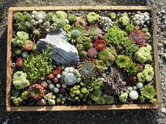 create a mosaic-like rock garden