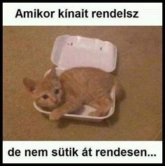 Funny Pictures of The Day Funny Shit, Funny Cats, Funny Animals, Funny Jokes, Funny Stuff, Armin, Morning Humor, Crazy Cat Lady, Cat Memes