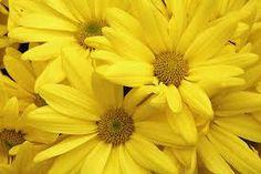 yellow flower - Google Search