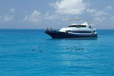 Our Boats - Dolphin Expeditions wild swims