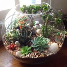 DIY Terrarium Succulents Picture Showing for Mini Succulents Garden Ideas DIY Succulent Plants - Garten Terrarium Design, Cactus Terrarium, Garden Terrarium, Terrarium Centerpiece, Glass Terrarium Ideas, Terrarium Wedding, Terrarium Decorations, Succulent Decorations, Pokemon Terrarium