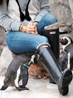 Penguins & Hunter Boots