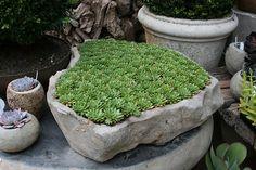 succulent rock planter