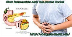 Obat Pankreatitis Akut Dan Kronis Herbal