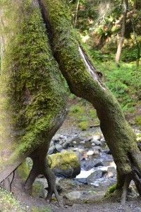 One of my best photos - taken at Starvation Creek in Oregon.