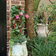 Spectacular Container Gardens: Mandevilla - Spectacular Container Gardening Ideas - Southern Living