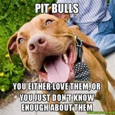 pit bull memes - Yahoo Image Search Results