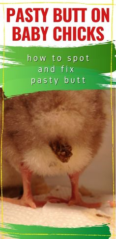 Keeping Chickens, Raising Chickens, What Are Pasties, Egg Incubator, City Farm, Baby Chickens, Home Remedies, Treats, Easy