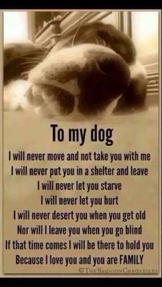 So true, I absolutely love my dog! Love My Dog, Puppy Love, Cutest Puppy, All Dogs, Best Dogs, Dogs And Puppies, Doggies, Border Terrier, Border Collie