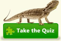 Great site with bearded dragon info. Diet. Housing. Breed. Care. Pet.
