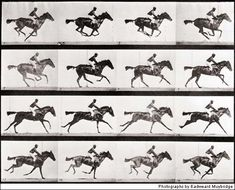 In Motion by Eadweard Muybridge. His horse photography answered questions of the timing and position of horses hooves in a trot and gallop which were often misrepresented in art. Motion Photography, History Of Photography, Sequence Photography, Famous Photography, White Photography, Eadweard Muybridge, Horse Galloping, Film D'animation, Horse Art