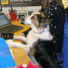 Could cat-loving Poppy be Britain's best office dog?
