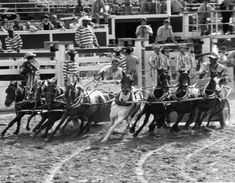 Saddle up for the Texas Prison Rodeo - Bayou City History
