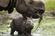 Cool Hippos....