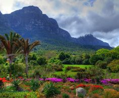 Kirstenbosch Mountain - Cape Town only an hour from Franschhoek home of La Clé des Montagnes- 4 luxurious villas on a working wine farm