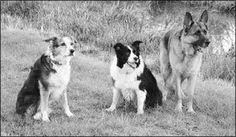 Canine Arthritis Treatment - Whole Dog Journal Article