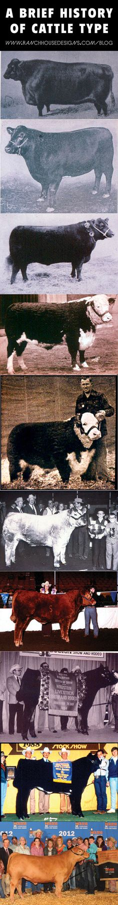 Harlan Ritchie's Brief History of Cattle Type - Ranch House Designs, Inc. Livestock Judging, Showing Livestock, Show Cows, Sweet Cow, Show Cattle, Beef Cattle, Animal Science, Ranch Life, Hobby Farms