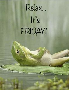 Not my circus not my monkeys. How to let go by way of Zen Frog. Funny Friday Memes, Friday Humor, Funny Jokes, Friday Gif, Minion Pictures, Funny Pictures, Happy Friday Quotes, Weekend Quotes, Its Okay Quotes