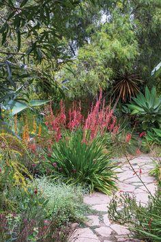 Growing a Mediterranean Garden - San Diego Home/Garden Lifestyles Drought Resistant Plants, Plants, Beautiful Gardens, Most Beautiful Gardens, Patio Garden, Outdoor Plants, Front Yard Landscaping, Garden, Mediterranean Garden