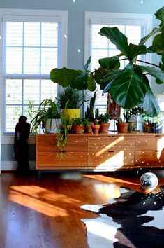 Disco ball paired with #sunlight and #plants=magic-design addict mom