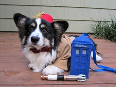 I present to you: the 11th Dogtor.   His TARDIS will hang from his leash and spin around.