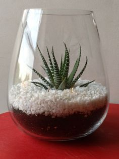Dollar Store DIY – Terrarium | The Devil's Punchbowl