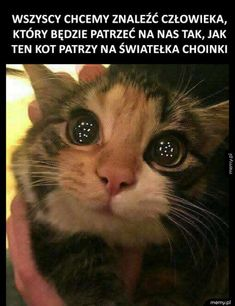 Cytaty Funny Animal Memes, Cat Memes, Funny Cats, Funny Memes, Puppies And Kitties, Kittens, Happy Kitten, Smiling Dogs, Cat Sitting