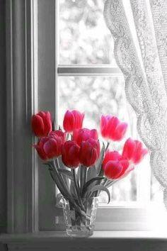 Beautiful Tulips~~enjoy a bouquet My Flower, Pretty Flowers, Fresh Flowers, Orquideas Cymbidium, Pink Tulips, White Tulips, Tulips Flowers, Cut Flowers, Ikebana