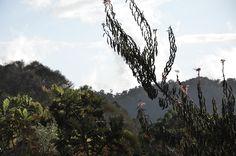 Trip San Gerardo de Dota, Costa Rica / OY! blog