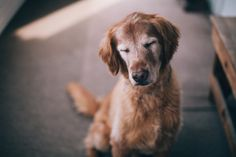 My first dog, Sally <3