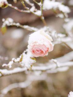 """Mais ou sont les neiges d'antan? __François Villon, """"Ballade des Dames du Temps Jadis"""""""