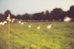 globe lights on a barbed wire fence.Only at a farm wedding! photo by A Moment Captured Yellow Wedding, Farm Wedding, Wedding Bells, Dream Wedding, Wedding Day, Wedding Stuff, August Wedding, Globe Lights, Bulb Lights