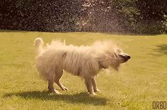 This Dog is a Lawn Sprinkler