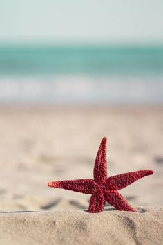 "drxgonfly: ""Red starfish on the beach(by Tony Marinov) / "" Whats Wallpaper, Ocean Wallpaper, Summer Wallpaper, Cute Wallpaper Backgrounds, Pretty Wallpapers, Aesthetic Iphone Wallpaper, Nature Wallpaper, Aesthetic Wallpapers, Strand Wallpaper"