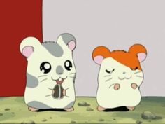 Watch the show… Hamtaro, Flying Dog, Best Love Stories, Animated Cartoons, All Things Cute, Theme Song, Cute Quotes, Kawaii Anime, Manga Anime