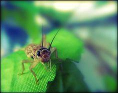 jiminy cricket by Mieka Bee, via 500px