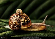 Carrying baby © Juan José Ceamanos Redondo✖️ SNAILS More Pins Like This At #FOSTERGINGER @ Pinterest