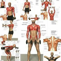 Leonard Maglonzo's media content and analytics Gym Workout Chart, Gym Workout Tips, Best Cardio Workout, Ab Workout At Home, At Home Workouts, Fitness Workouts, Weight Training Workouts, Fitness Tips, Fitness Models