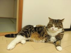 Hey Maru, I want to take your photograph.  Please make a cool pose.