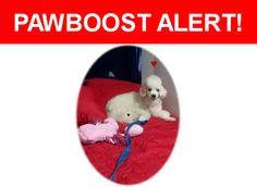 Please spread the word! Peluchina was last seen in Los Angeles, CA 91324.    Nearest Address: Near Bryant St & Vanalden Ave
